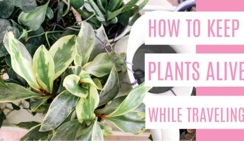 How to Keep Plants alive while Traveling
