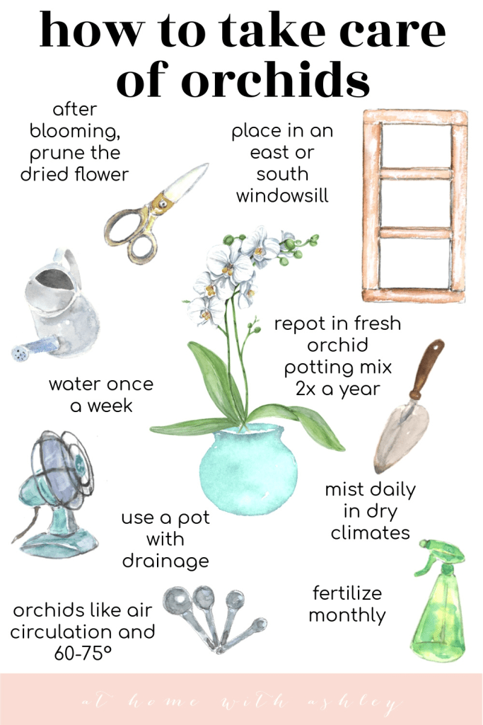 how to care for orchids. 10 easy tips for growing orchids in your home. From using a water meter, misting, they perfect temperatuure they want, and fertilizer.