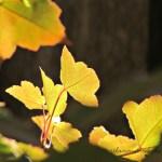 Fall Splendor an Ode to Fall 2013