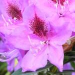 Wordless Wednesdays – Spring Flowers…My New Addiction