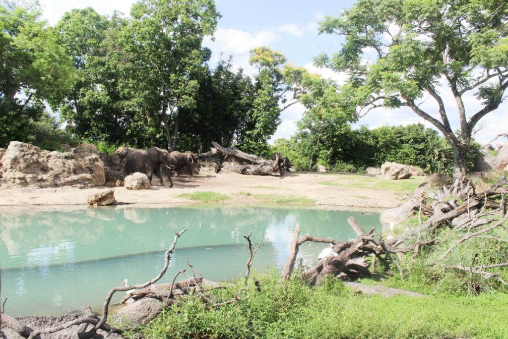 Orlando Vacation - Disney - Animal Kingdom - Elephants - At Home With Zan