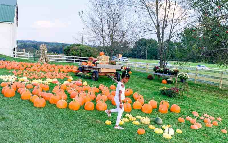 A Trip to the Pumpkin Patch – Our First One in PA