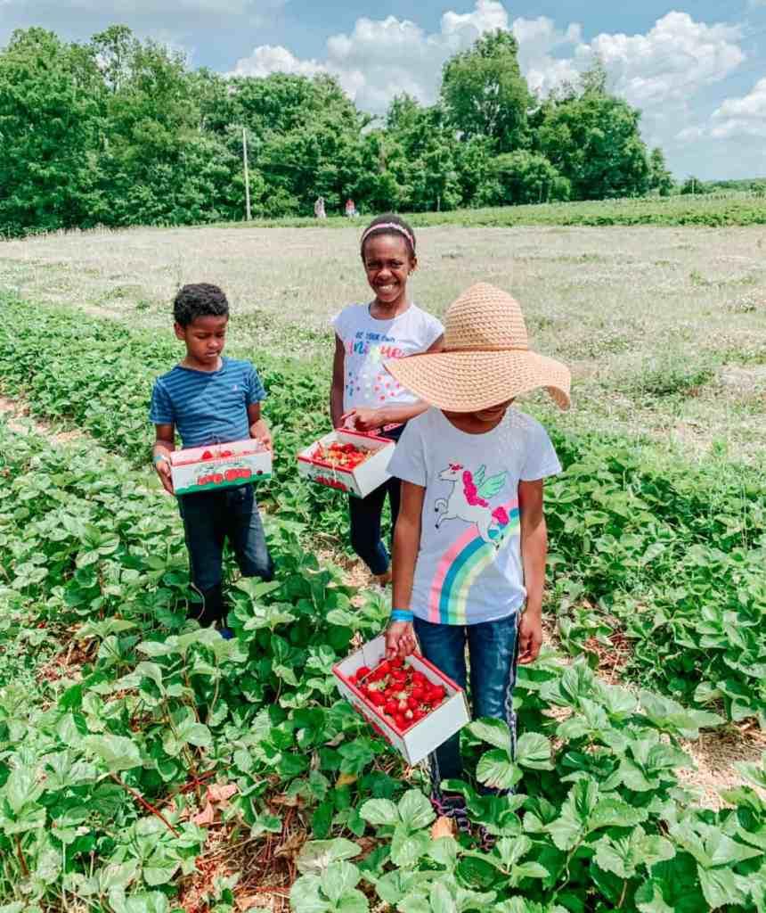 Strawberry Picking June 2020