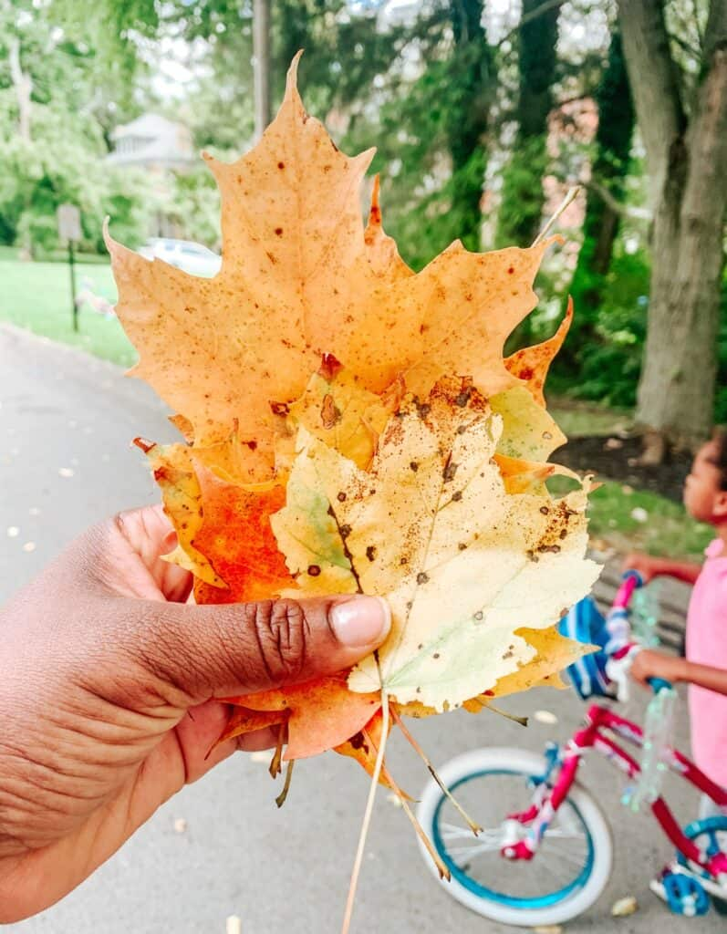 Collecting Fall Leaves with the Kids - Fall Fun Activity for Kids - athomewithzan (3)