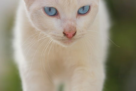 Old Blue Eyes