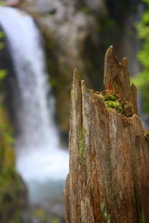 Mt. Rainier National Park, WA