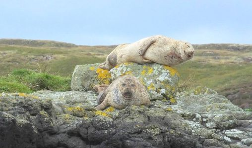 Happy Seals