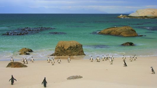 South Africa - Boulders Beach, Simons Town