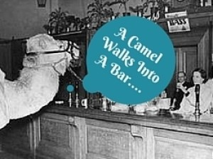 A Camel Walks Into A Bar 3...