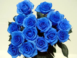 blue rose by suntory