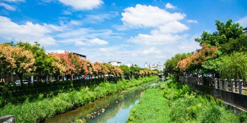  屏東景點 萬年溪畔,台灣欒樹換妝盛開,讓溪畔充滿了浪漫風情