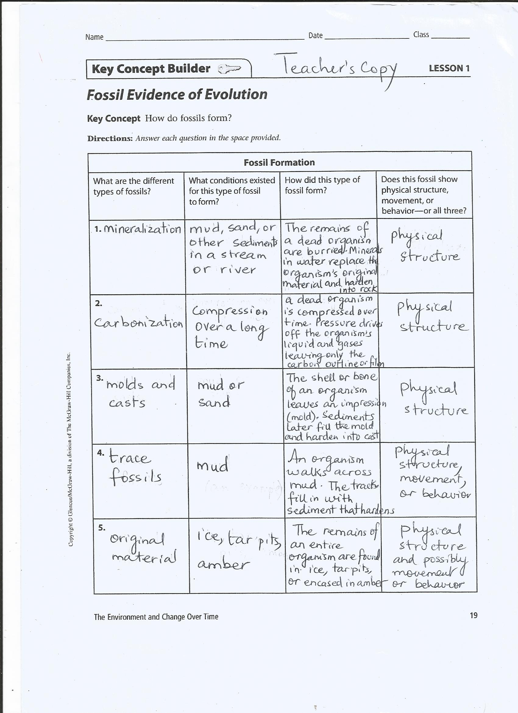 Evidence Of Evolution Worksheet Answers