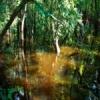 Cea mai veche rezervatie naturala din Romania, distrusa de un singur om