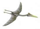 ASUR si Discovery Channel va invita la Targul de Dinozauri