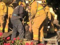 O femeie a ramas blocata in cosul de fum dupa ce a incercat sa intre in casa fostului iubit
