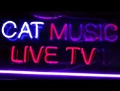Cat Music Live TV / Non Stop Music 24/7