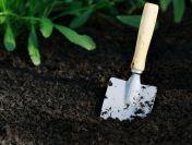 Acțiuni esențiale în pregătirea grădinii pentru iarnă
