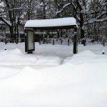 București: Meteorologii transmit că luni se va așterne un strat de zăpadă de câțiva centimetri