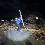 Vrancea: Drumul Național 2D a fost blocat de copacii căzuți la intrarea în Tulnici