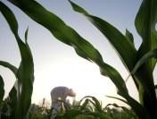 Fermierii pichetează Ministerul Agriculturii