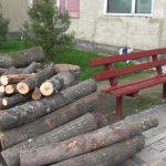 Arad: Primărie amendată pentru că a tăiat copaci pentru a face o parcare