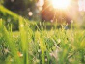 Maramureș: În următoarea săptămână, vremea se va încălzi treptat