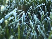 1 martie, întâia zi de primăvară calendaristică