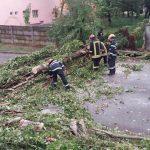 București: 27 de copaci au fost rupți de vânt