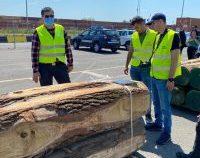 Peste 100 de tone de materiale lemnoase, oprite de la export în portul Constanța Sud-Agigea | AUDIO