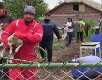 Constanța: Intervenție a polițiștilor pentru a salva 150 de câini și pisici chinuiți de doi soți    GALERIE FOTO