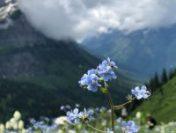 În zonele de munte, vremea va fi normală pentru a doua jumătate a lunii iunie