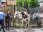 Doi turişti străini călare s-au rătăcit în centrul Craiovei