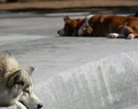 Străzi curate în Tel Aviv: Proprietarii de câini, obligați să ofere mostre din ADN-ul animalelor