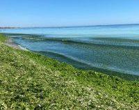 3.000 de tone de alge și deșeuri, adunate de pe plaje, de la începutul lunii iulie