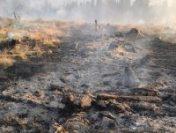 Hunedoara: Pompierii intervin pentru stingerea unui incendiu de vegetație în munții Șureanu | AUDIO