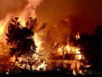 Incendiile din Grecia: În Atena miroase a brad ars | AUDIO