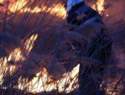 Incendiu de vegetaţie în Munţii Şureanu