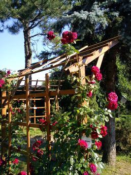 Trandafiri23