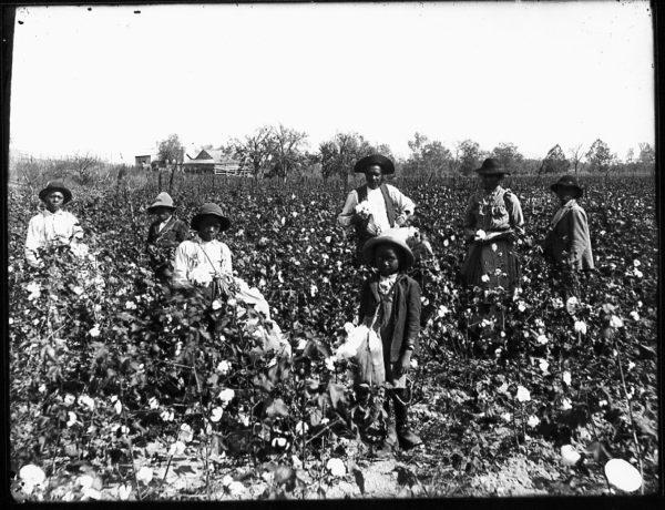 slaves-in-field