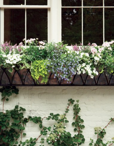 A climbing hydrangea with white lace cap flowers is a self-adhesive vine growing beneath the new window box.