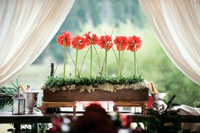 A row of amaryllis makes for a striking focal point against the framed backdrop of the pastoral setting.