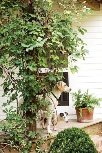 The dogs are as much a part of life around the house as the family itself. Andrew has had Bentley, the Jack Russell, since he was in college at the Rhode Island School of Design. The younger one, Cletus, is an English pointer.