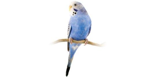 Parakeet, $21.99. Available at PetSmart Buckhead, 3221 Peachtree Rd. NE, Atlanta 30305. (404) 266-0402; petsmart.com