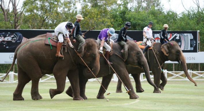 """This year""""s King""""s Cup Elephant Polo Tournament is September 12-16."""