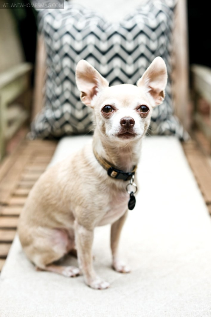 Their eight-year-old Chihuaha, Terry, gets the run of both stomping grounds.