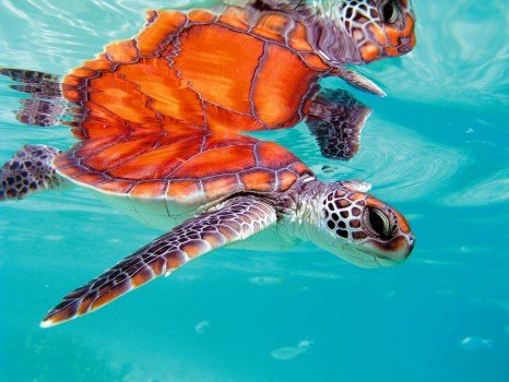 Large turtles are known to nest under the coral sands.