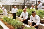 Grand Velas chefs maintain their own vegetable and herb gardens from which many of the resort's award-winning dishes are made.
