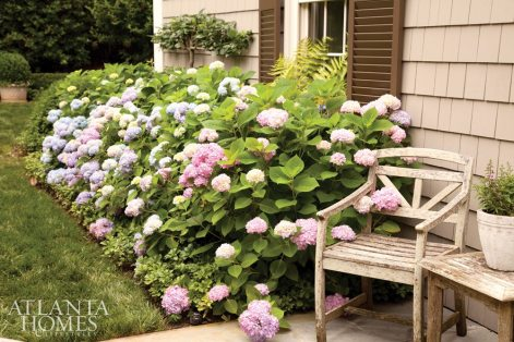 An espaliered horizontal cordon pear tree by Peter Thevenot of River Road Farms adds an elegant touch to the rear courtyard. 'Endless Summer' hydrangea (blue macrophylla) billows into the lawn space.