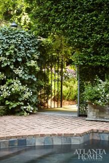 At a garden gate, 'moonlight' climbing hydrangea blooms hardily.