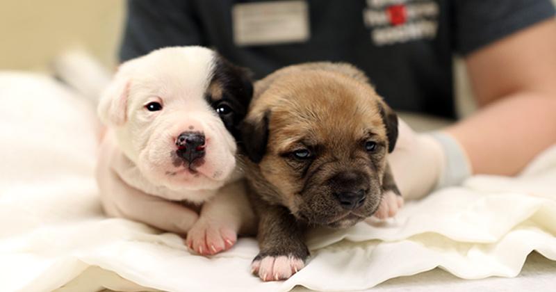 puppy and kitten season